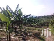 6 Acres In Busunju With A Banana Plantation   Land & Plots For Sale for sale in Central Region, Wakiso