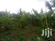 Hot Deal Urgent Money Plot Size 100by50ft With Banana Plantaty   Land & Plots For Sale for sale in Central Region, Kampala