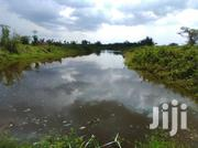 24 Fish Ponds and 90 Acres Land | Commercial Property For Sale for sale in Central Region, Luweero