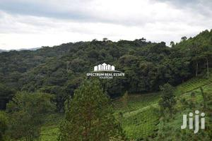 Land for Sale in BWINDI