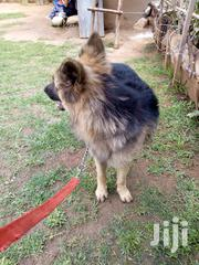 Mobile Vet Services And Dog Training | Pet Services for sale in Central Region, Kampala