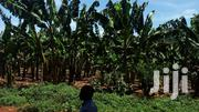 4acers of Land With Banana Plantation Sold in Katende on Masaka Road   Land & Plots For Sale for sale in Central Region, Mpigi