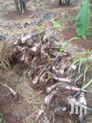 Banana And Gonja Suckers For Sale | Farm Machinery & Equipment for sale in Central Region, Kampala