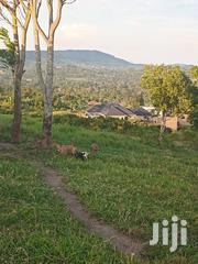100 X 50 For Sale Kiterede Wakiso | Land & Plots For Sale for sale in Central Region, Wakiso